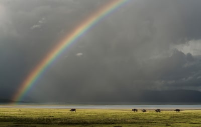 Chris-Schmid-herd-of-animals-walk-across-serengeti-plain-with-rainbow-behind