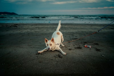 Gábor-Erdelyi-sony-smiling-doggo-waiting-to-pounce-on-beach